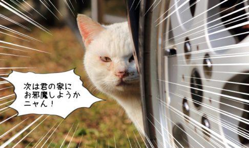 野良猫対策とおすすめ撃退アイテム